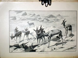 Short Stalks: Or Hunting Camps North, South, East, and West