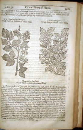 The Herball or Generall Historie of Plantes Gathered By John Gerarde of London Master in Chirurgerie