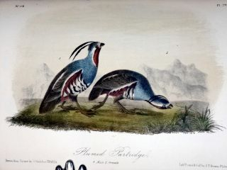 The Birds of America From Drawings Made in the United States and Their Territories (8 Volume set) with 500 Original Hand Colored Plates