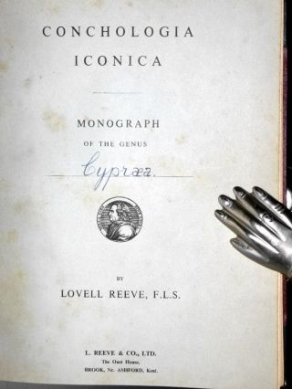 Monograph of the Genus Cypraea