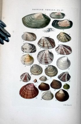 Illustrated Index of British Shells Containing Figures of All the Recent Species with Names and Information