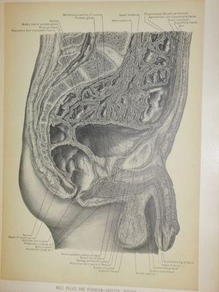 Surgical Anatomy : A Treatise on Human Anatomy in Its Application to the Practice of Medicine and Surger, Illustrated By 400 Plates Nearly All Drawn for This Work from Original Dissections (3 Volume set)