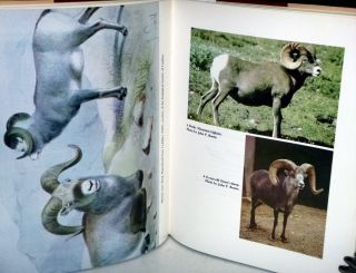 The Wild Sheep of the World with a chapter on Hunting By John H. Batten